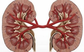 Киста почки: разновидности, причины и симптомы, диагностика и лечение
