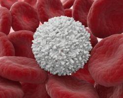 Как повысить лейкоциты: лучшие консервативные и народные методы
